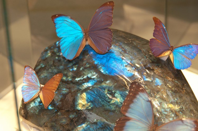 munich mineral show exhibitions
